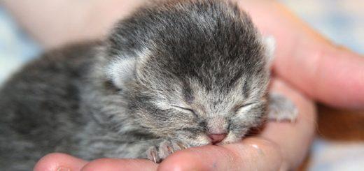 Billedet viser en hånd om en kattekilling. Siden handler om, hvordan du kan berolige dig selv, når du bliver mindet om traumer.